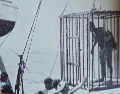 gàbia anti-taurons