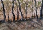 arbres a la vorera d'El Camí 7 juny 2020