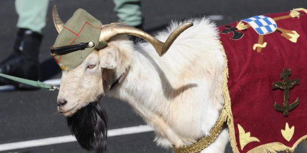 cabra legionària